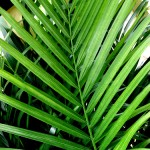 21-palm-branches